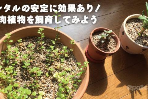 メンタルの安定に効果あり!植物飼育をしてみよう