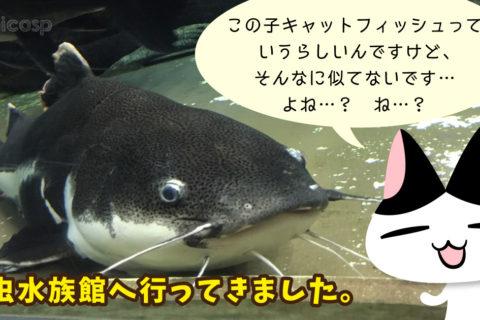 浅虫水族館(青森県青森市)|アーティスト・デートおすすめスポット