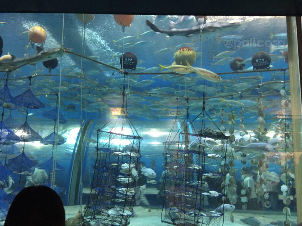 実際の海の様子を再現|浅虫水族館