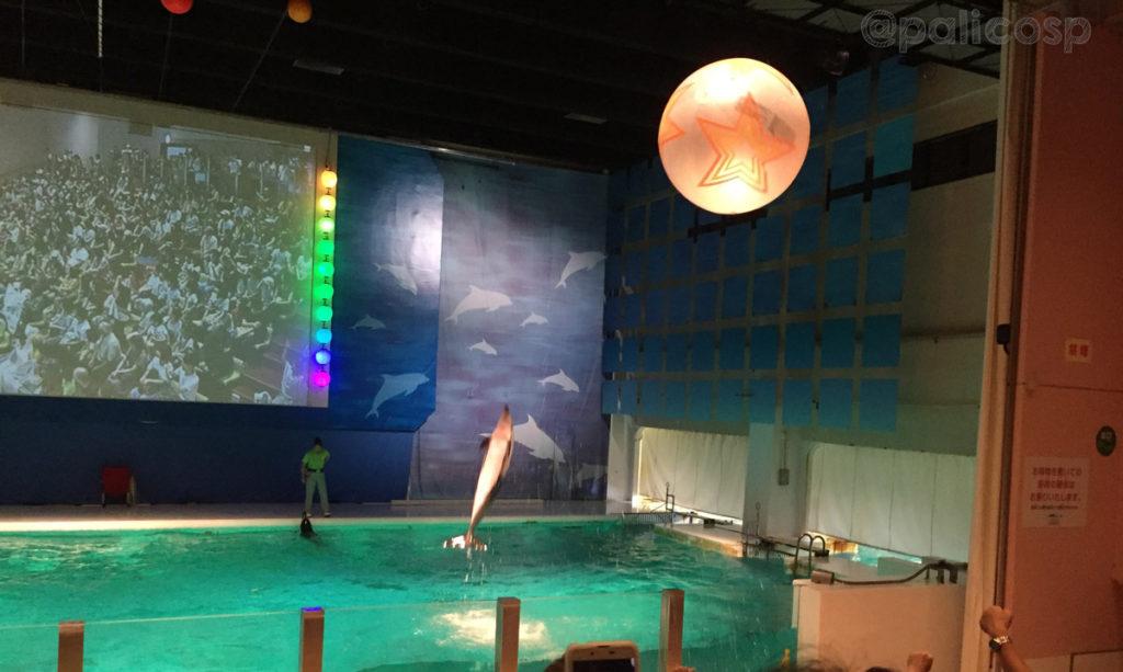 イルカとキャッチボール|浅虫水族館