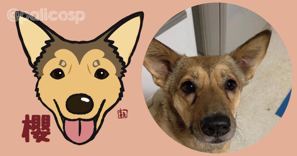 犬似顔絵イラスト|櫻