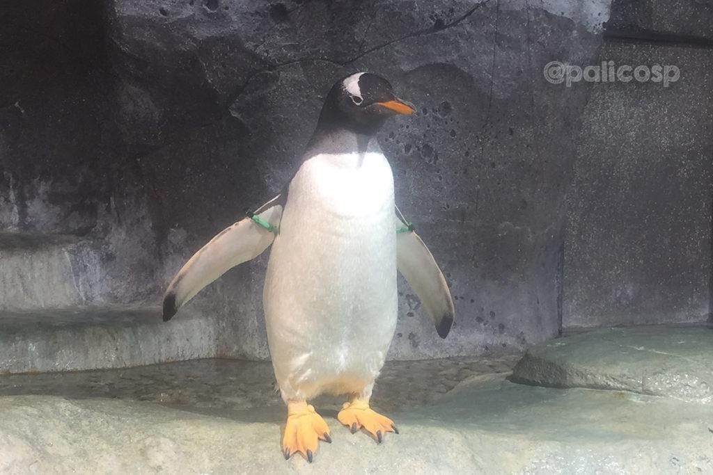 福山動物園|ペンギン2