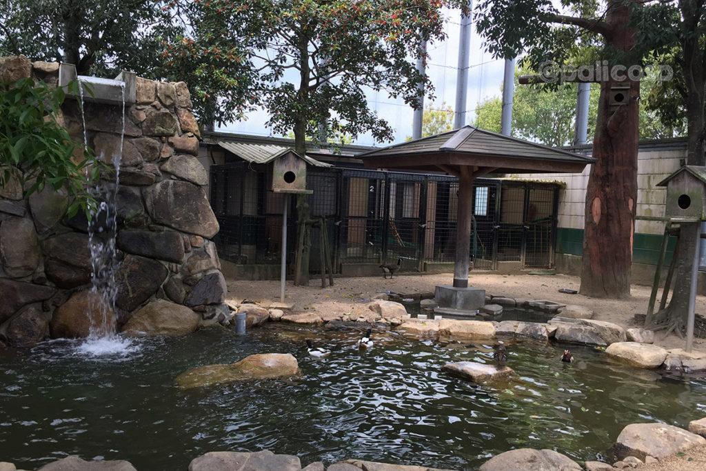 福山動物園|鳥ゾーン